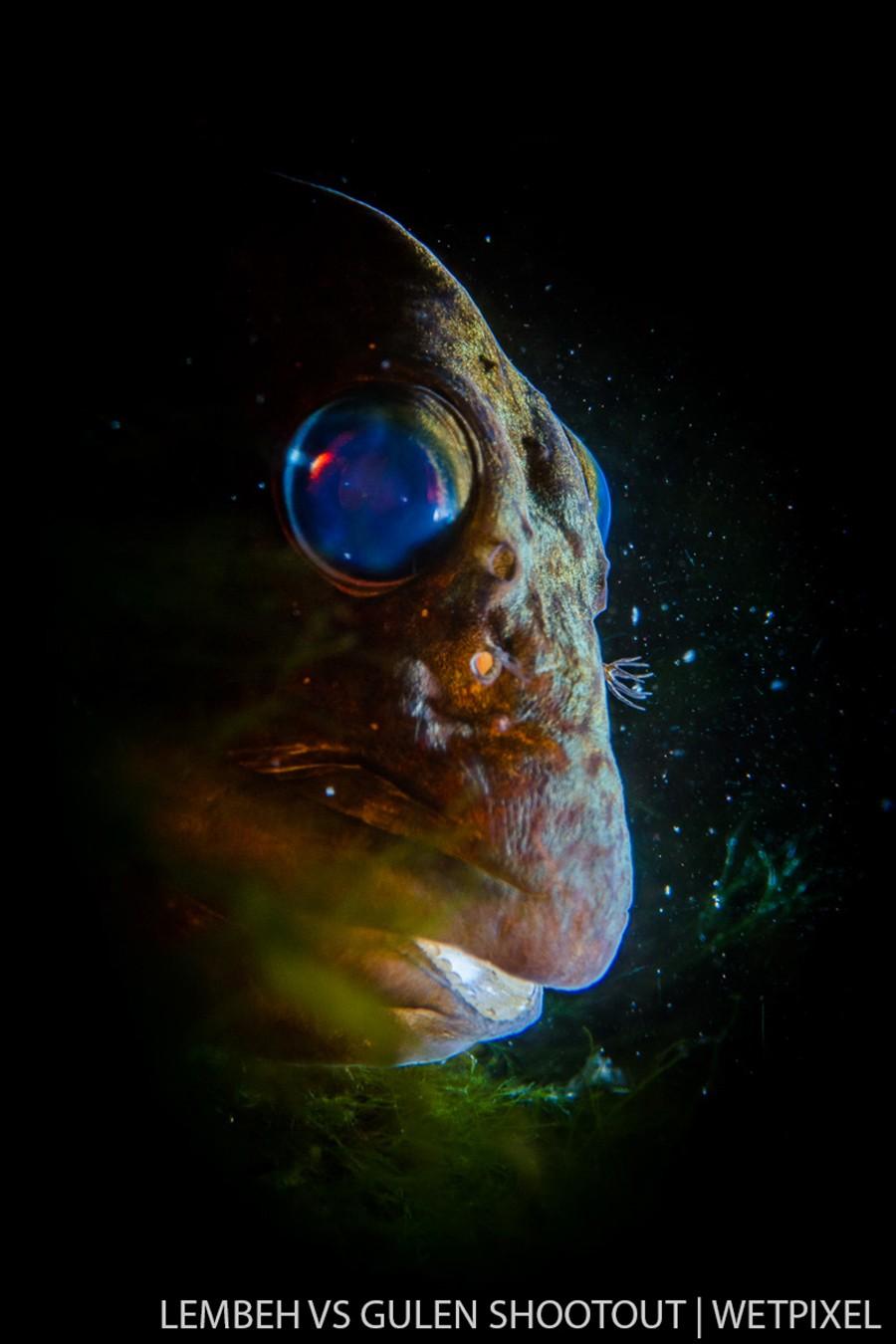 Dag Leslie Hansen, Gulen Norway, Fish and Invertebrates