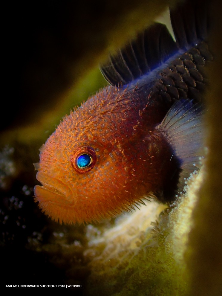 Category: Compact (Fish Portraits) Second: Lim Sudong