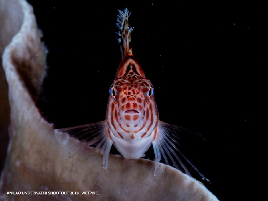 Category: Compact (Fish Portraits) Third: Ajiex Dharma