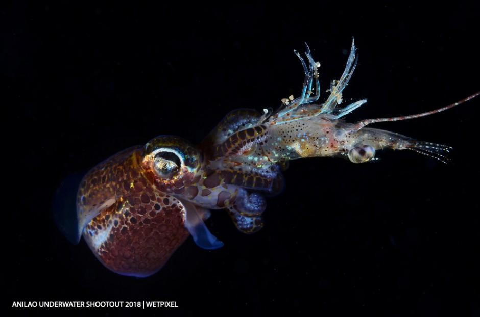 Category: Open (Marine Behavior) Winner and DOT Photographer of the Year: Dennis Corpuz