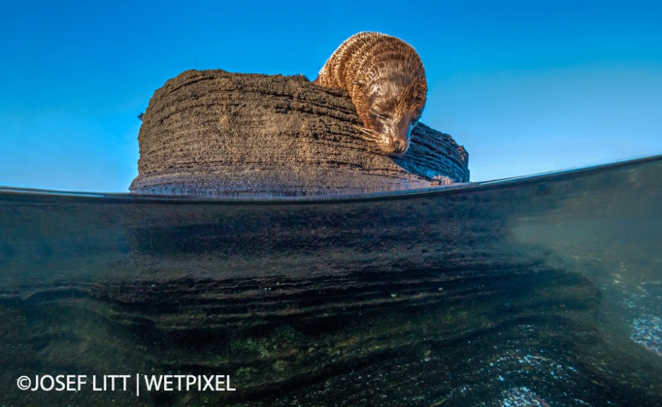 It was a bit of a schlepp to carry the camera in the housing for a mile and a half but it paid off in the rock pools.