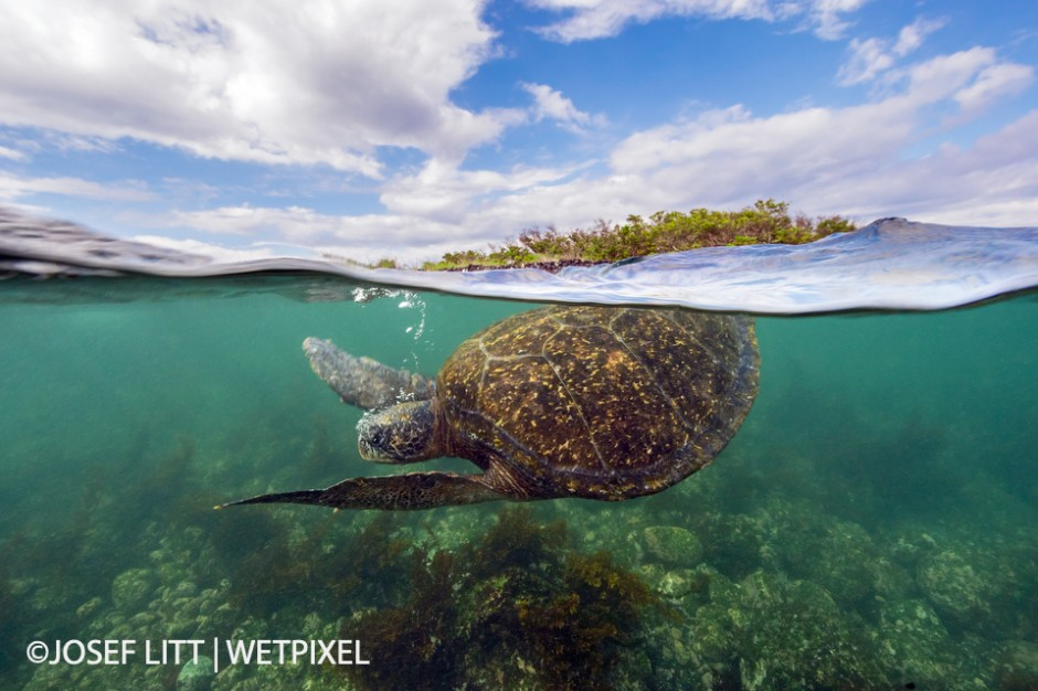 This little cove was home to at least eight turtles. For years I wanted to take a split image of a turtle breathing on the surface. This one was better in the end.