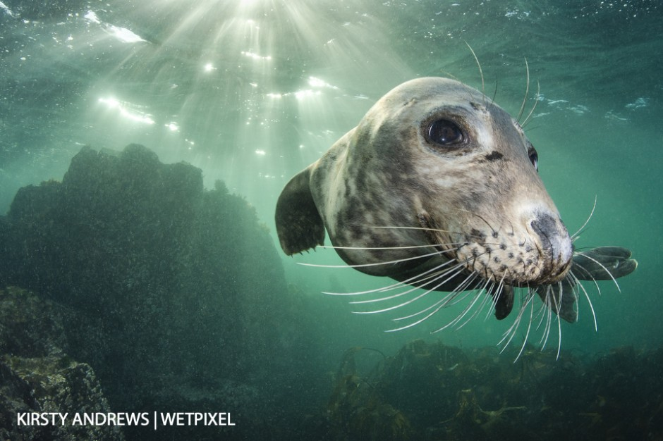Farne Islands seal - over 2,000 grey seal pups were born on the Farne Islands in Northumberland in 2017.  They are playful, photogenic and a real draw for photographers.