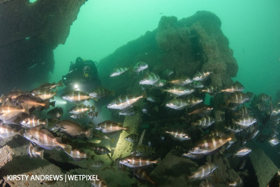 Schokland wreck, Jersey - countless wrecks show off the UK's maritime history as well as providing artificial reefs for marine life
