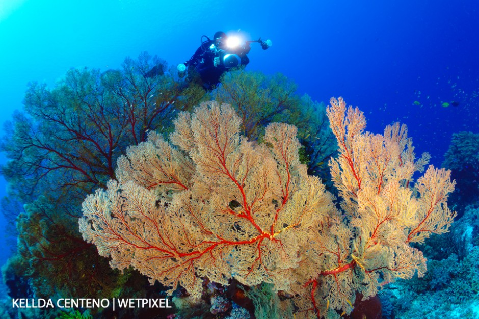 Very large sea fans and my dive buddy at Tubbataha.