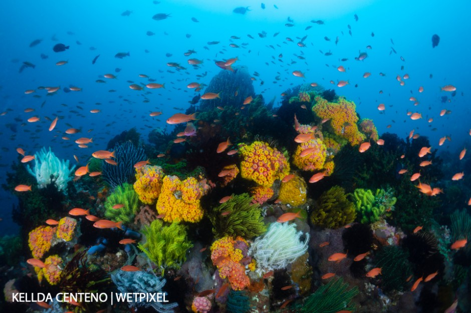 An explosion of colors at Sombrero Island, off the shoreline of Anilao.