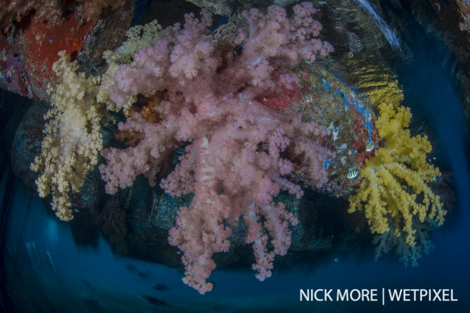 Soft corals under the jetty at Misool Eco Resort.