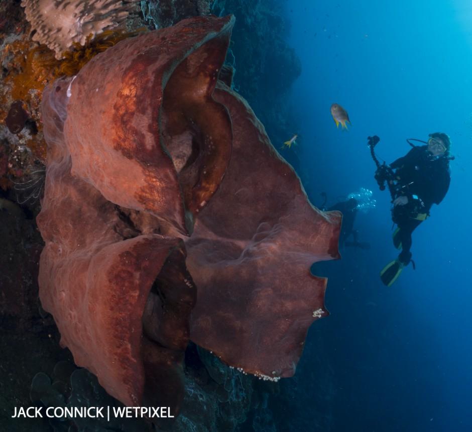 Banda Sea Sponge. 60mm Nikkor & Nauticam WWL wet lens. ISO 400, F/14 @ 1/250 sec.