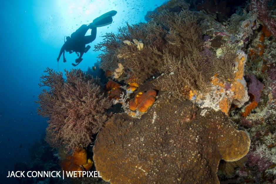 Dive on Banda Sea wall. Sigma 15mm FE. ISO 400, f/14 1/160 sec.