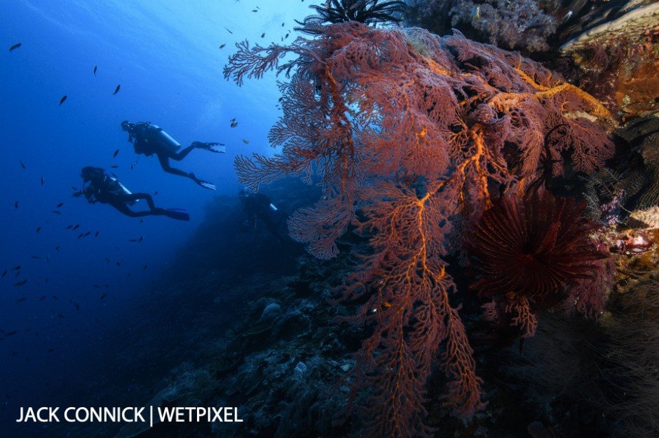 Gorgonian & Divers. Nikon 16-35mm lens with Sea & Sea focus diopter. ISO 800, f/14 1/125 sec.