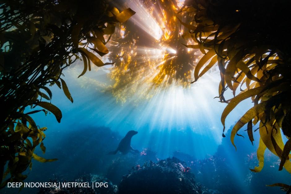 """Winner Reefscapes: """"*Burst*"""" by Tyler Schiffman"""