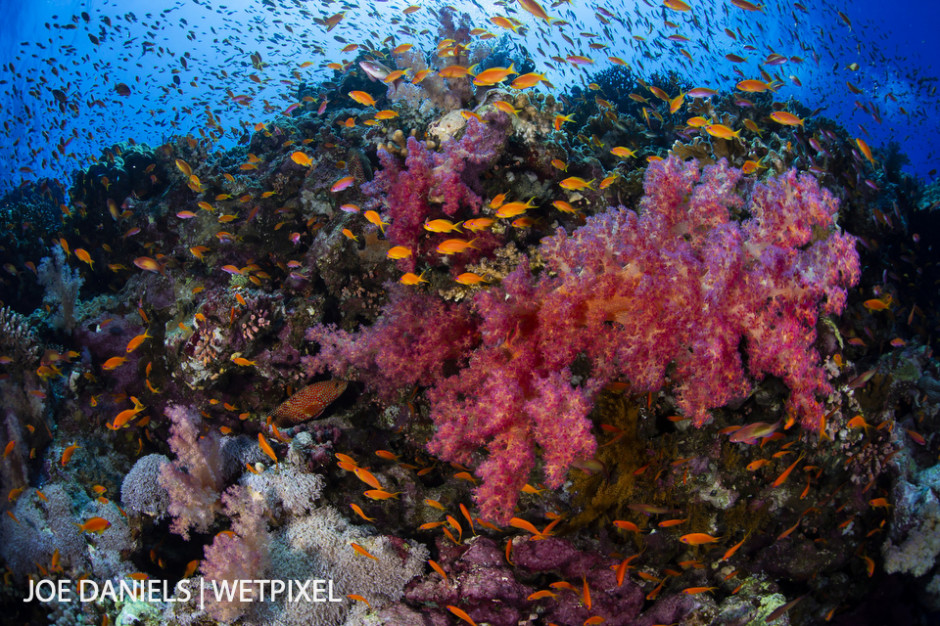 A vibrant and bustling Elphinstone Reef.