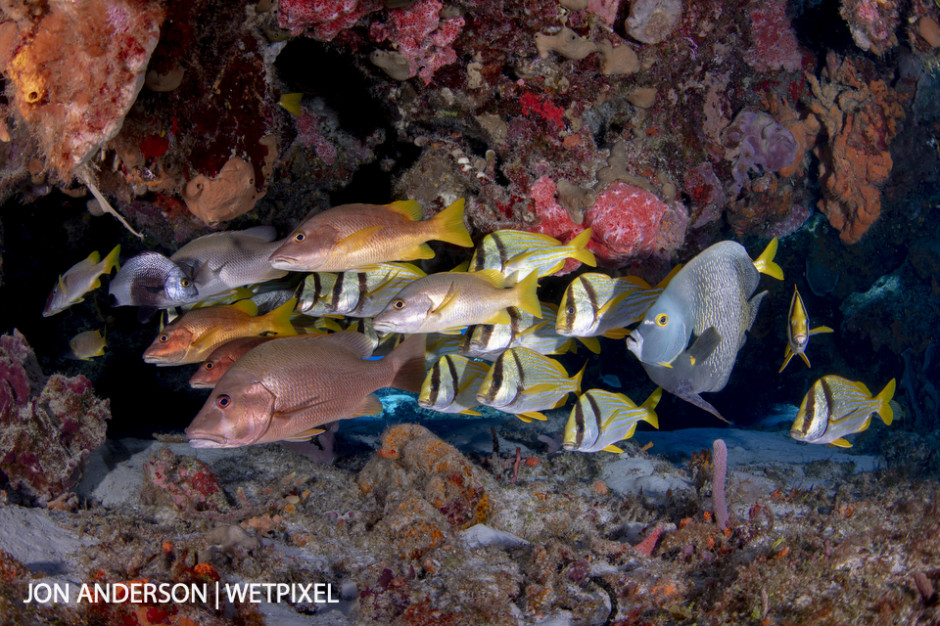 A motley crew of reef fish hide from the current behind a large coral formation.