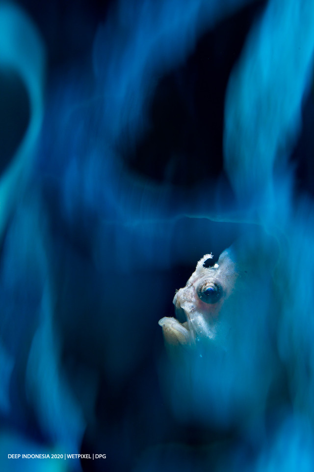 Animal Portrait category second place: **Joe Daniels**   *Blue Smoke*