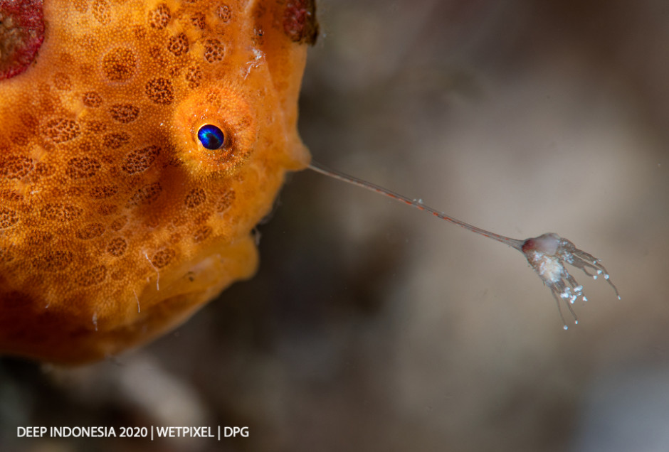 Animal Portrait category third place: **Peter de Maagt**   *Gone Fishing*