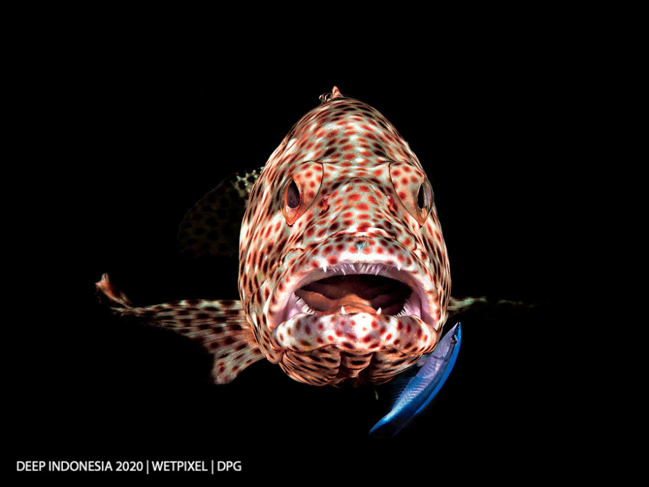 Compact Camera category third place: **Ferenc ifj. Lörincz**   *Open Mouth Grouper*