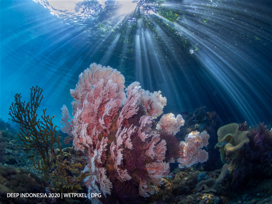 Reefscapes category third place: **Kevin de Vree** | *And Then there was Light*