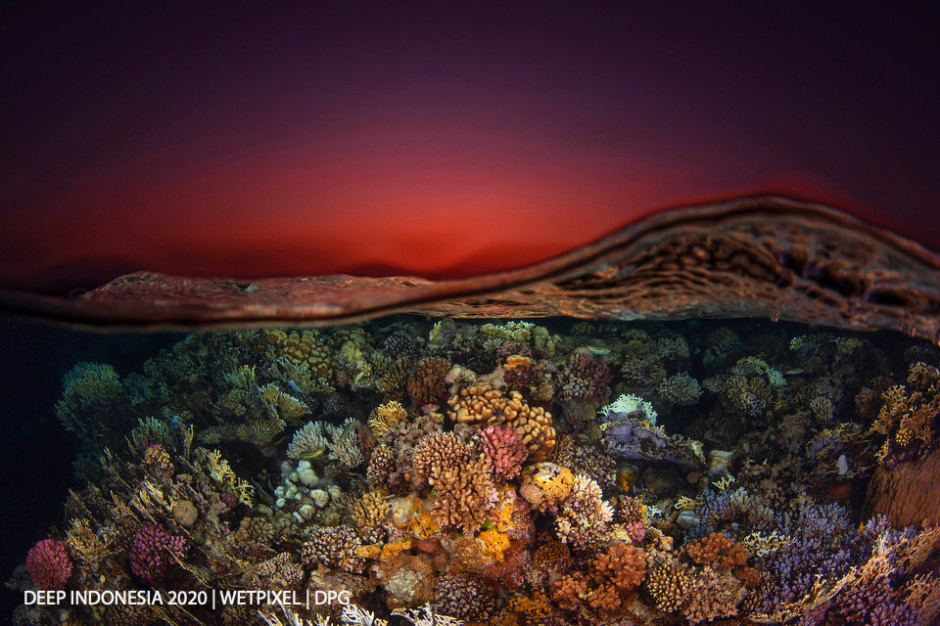Reefscapes category honorable mention: **Luc Roman**   *Reefscape 1 Red Sea*