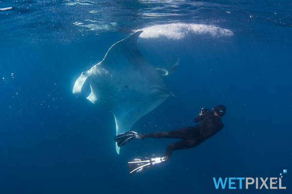 Mantas on Wetpixel