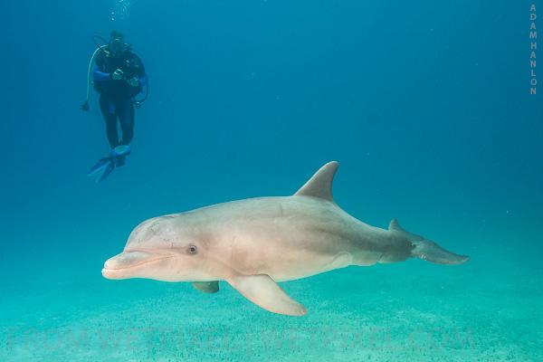 Любителей суши кормят отравленным мясом дельфинов