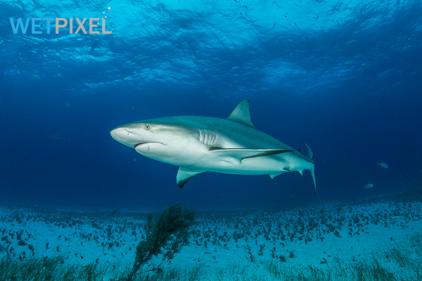 Sharks on Wetpixel