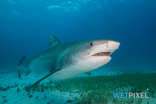 Noaa reopens florida shark fishery for Florida commercial fishing license