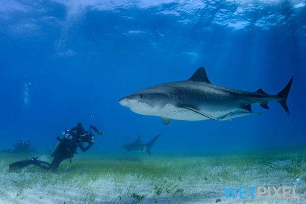 Shark ecotourism on Wetpixel