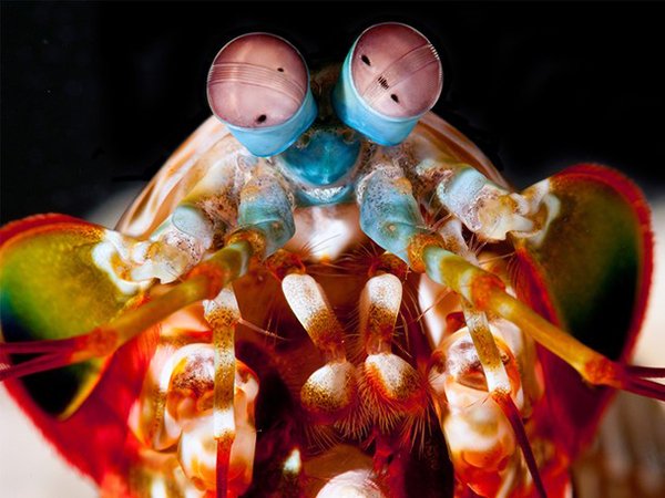 National Geographic mantis shrimp on Wetpixel