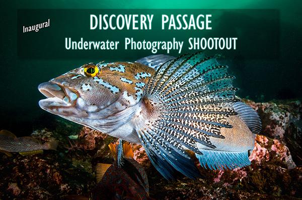 Underwater Shootout on Wetpixel