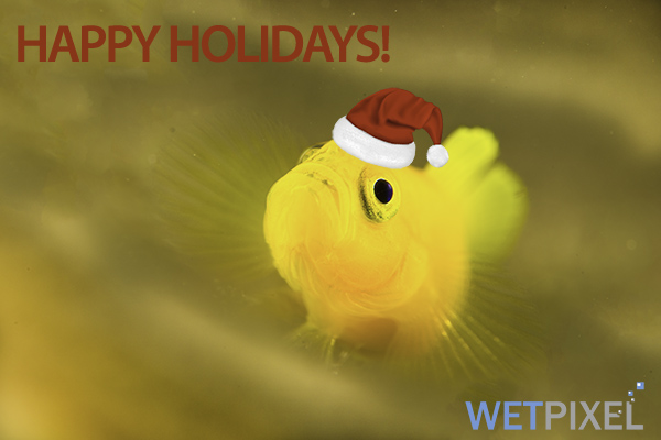 Happy holidays on Wetpixel
