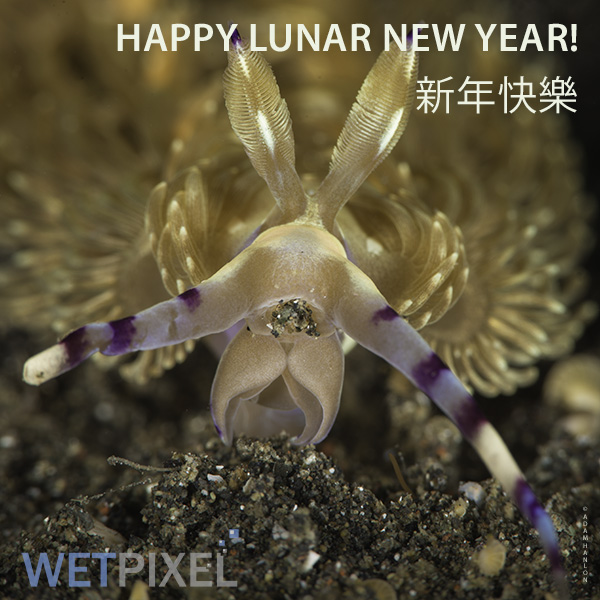 Happy lunar New Year from Wetpixel