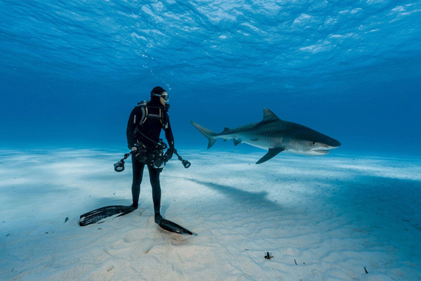 National Geographic Publishes Best Underwater Images Of - The best underwater photographs of 2016 are amazing