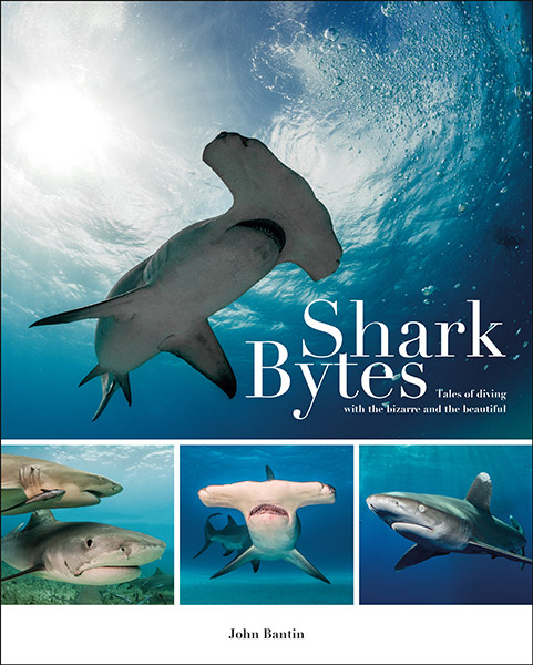 Shark Bytes on Wetpixel