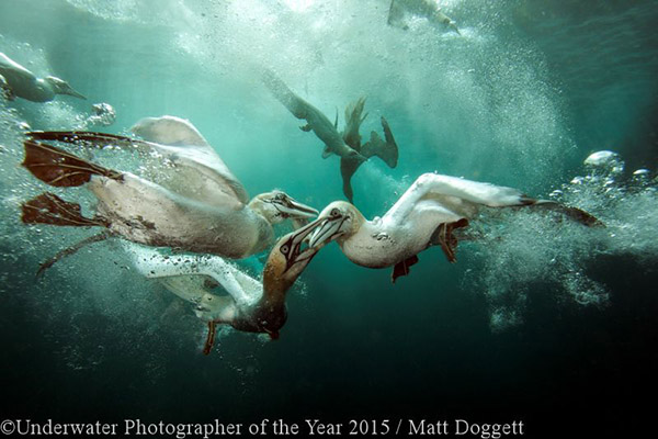 Underwater Photographer of the Year 2016 on Wetpixel