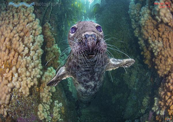Underwater Photography on Wetpixel