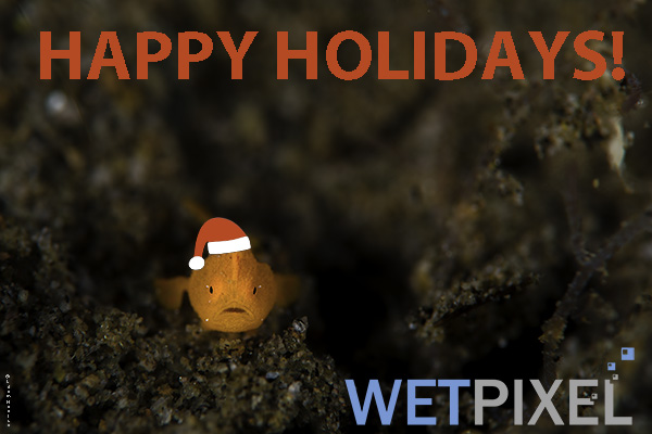 Happy Holidays 2019 on Wetpixel