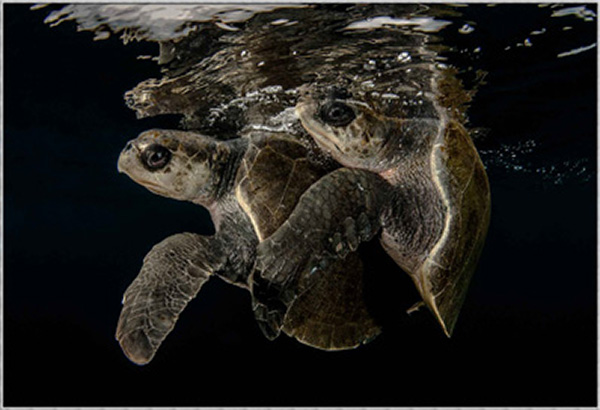 подводное фото Победители Beneath the Sea 2016