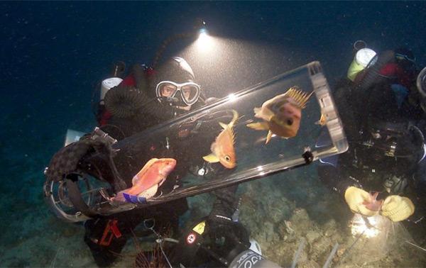 100 новых видов подводных существ в Филиппинах