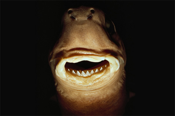 Article published on cookie cutter shark bites of whales ...
