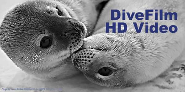 DiveFilm HD on Wetpixel