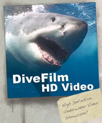 DiveFilm HD Video podcast is available free at iTunes and showcases some of the best underwater imaging from around the world in high definition.