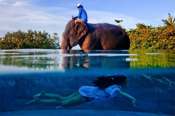 В бассейне со слоном