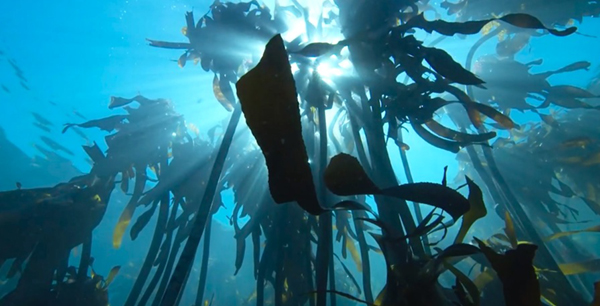 F55 underwater on Wetpixel