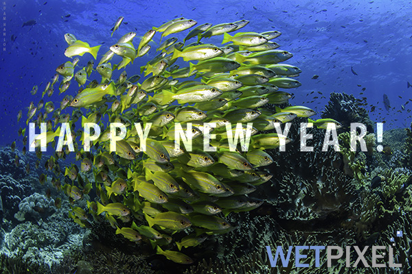Happy New Year 2018 on Wetpixel