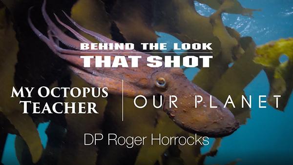 My Octopus Teacher on Wetpixel