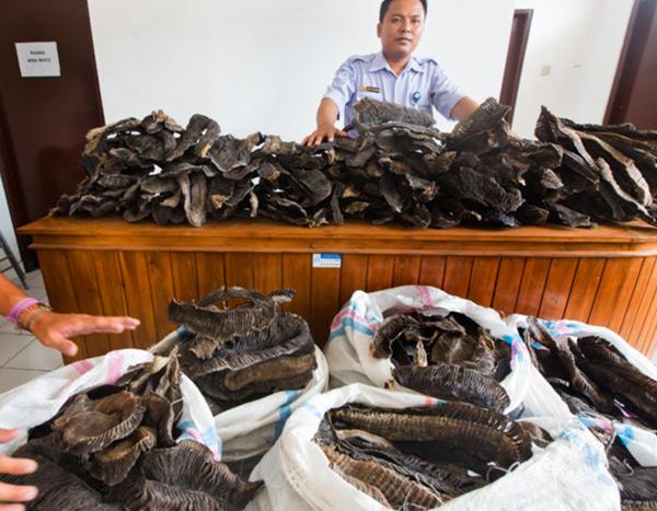В Индонезии впервые осужден торговец мантами