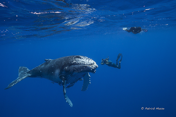 Humpback whales by Patrick Masse on Wetpixel