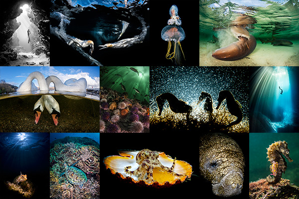 Underwater imaging contests on Wetpixel