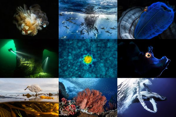 Underwater Photo Contests on Wetpixel