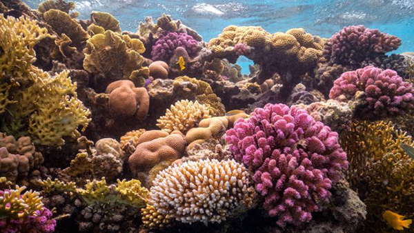 Red Sea reefs on Wetpixel